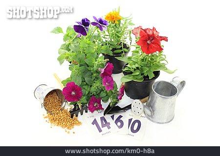 Garden Season, Sowing Time