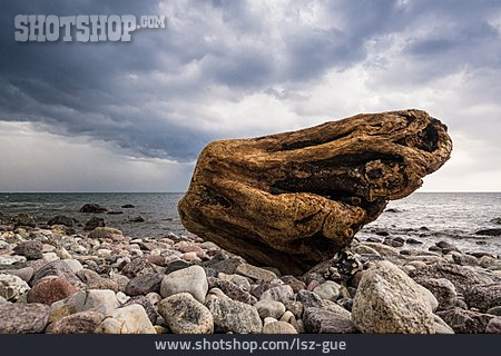 Tree Trunk, Stone Beach, Göhren
