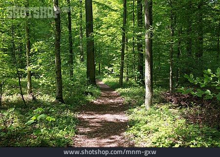 Footpath, Path