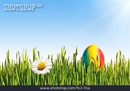 Easter, Easter Egg, Daisy