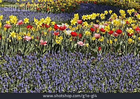 Spring Flower, Flower Bed