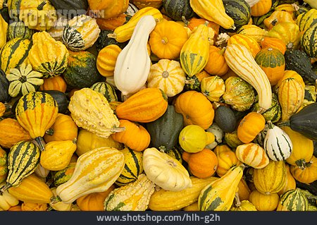 Squash, Ornamental Gourd, Pumpkin Harvest