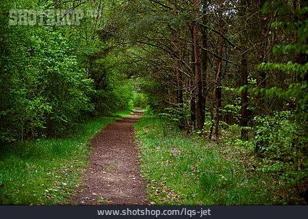 Footpath, Forest, Path