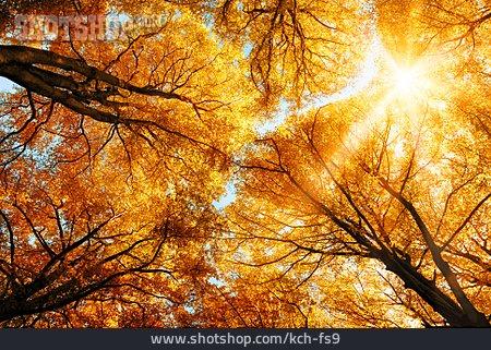 Autumn, Trees, Tree, Treetop