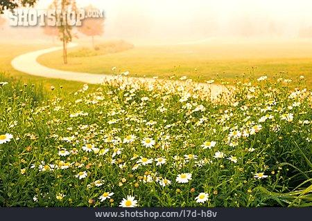 Nature, Footpath, Meadow Flower