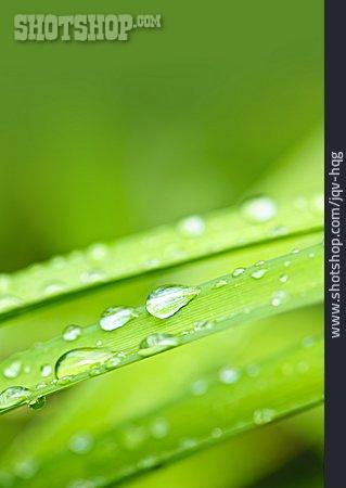 Nature, Blade Of Grass, Dewdrop