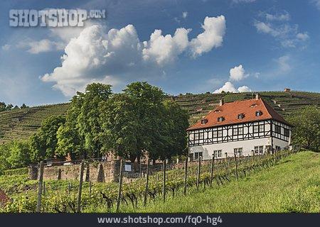 Winery, Landsitz, Hoflößnitz