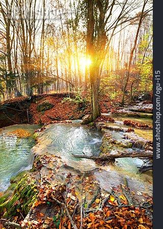 Stream, Waterfall, Forest, Creek