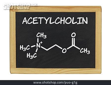 Neurotransmitter, Acetylcholine