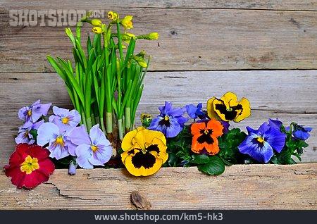 Flower, Spring Flowers
