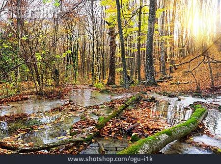 Stream, Forest, Autumn, Creek