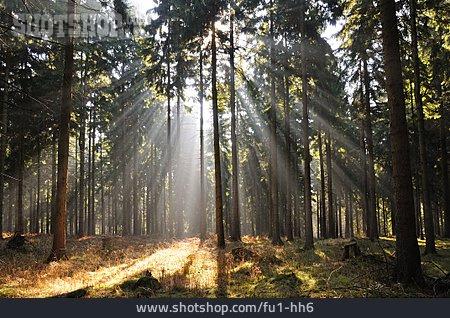 Forest, Zittauer Gebirge