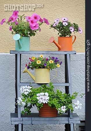 Flowers, Flower Pot, Flower Arrangements