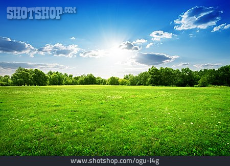 Nature, Meadow, Environment, Ecology