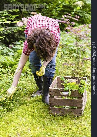 Gardening, Weed, Weeding