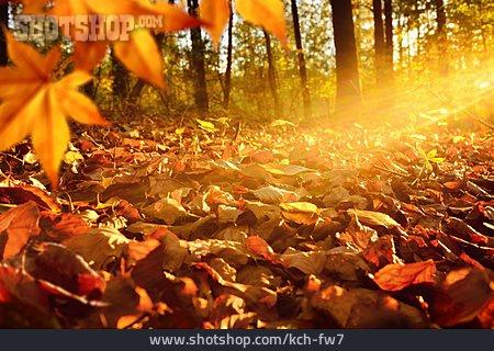 Leaves, Autumn Leaves, Autumn
