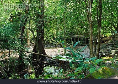 Jungle, Cambodia, Khmer