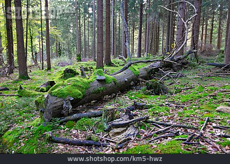 Forest, Tree Trunk, Mossy