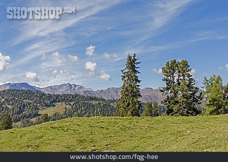 Meadow, Austria, Pfunderer Valley