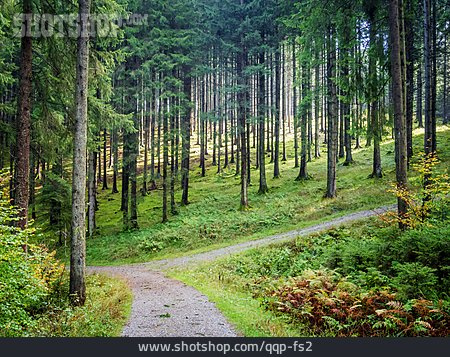 Forest, Path