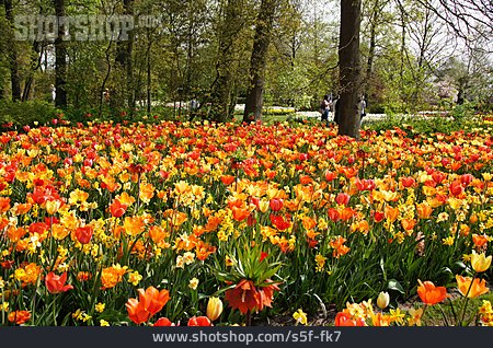 Park, Tulips Bloom, Keukenhof