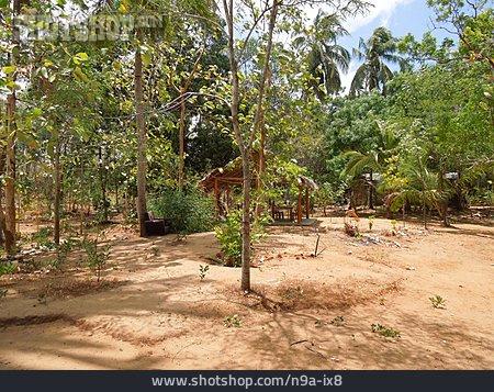 Garden, Cabin, Sri Lanka