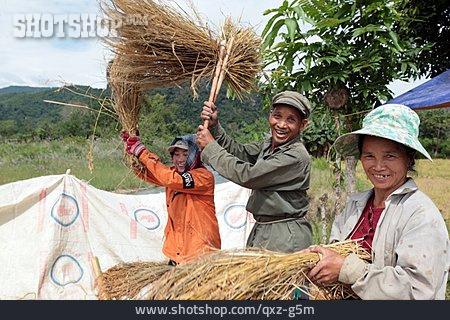 Rice Cultivation, Rice Farmer, Laos