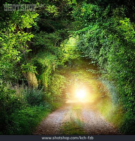 Sunlight, Path, Deciduous Forest