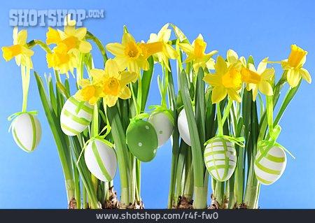 Easter Egg, Daffodil