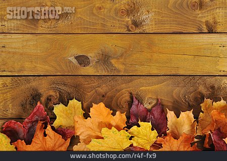 Copy Space, Autumn Leaves, Maple Leaves