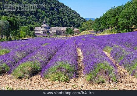 France, Lavender Field, Senanque