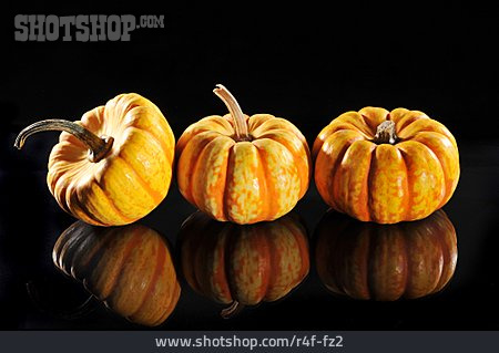Squash, Gourd
