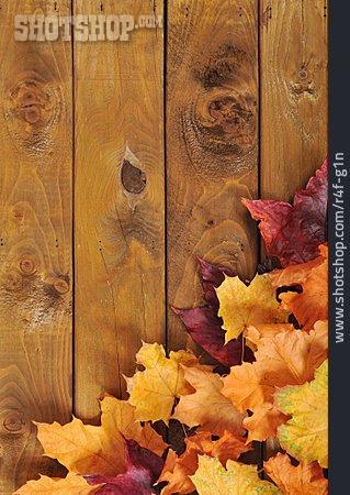 Copy Space, Autumn, Leaves, Autumn Leaves