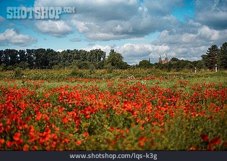 Poppy Field, Speyer, Speyer Cathedral
