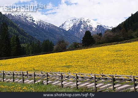 European Alps, South Tyrol, Alp, Ultental