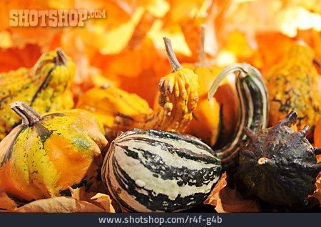 Autumn, Squash, Harvest Time