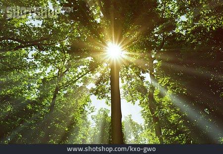 Sunlight, Tree, Sunbeam