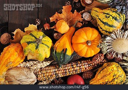 Squash, Thanksgiving, Pumpkin