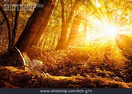 Forest, Sunbeams, Light Beam