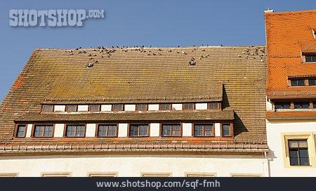 Roof, Pigeons