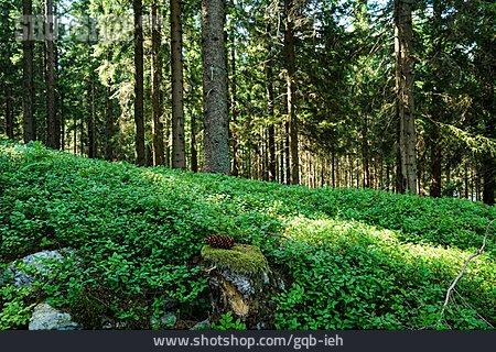 Forest, Undergrowth