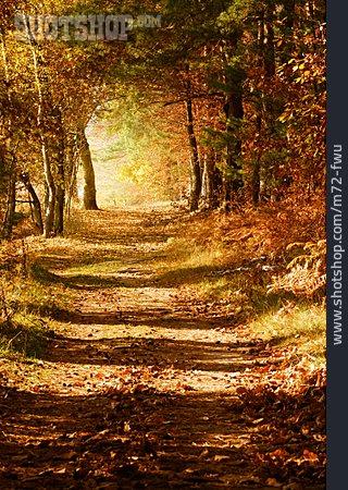 Autumn Forest, Autumn