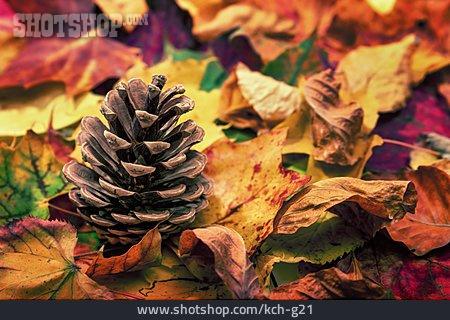 Autumn, Pine Cones