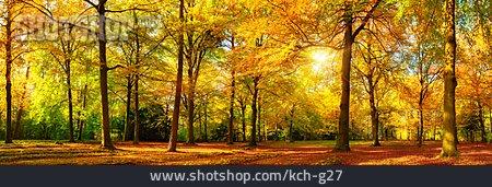 Autumn Forest, Tree, Autumn Leaves