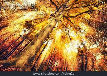 Autumn, Autumn Leaves, Treetop