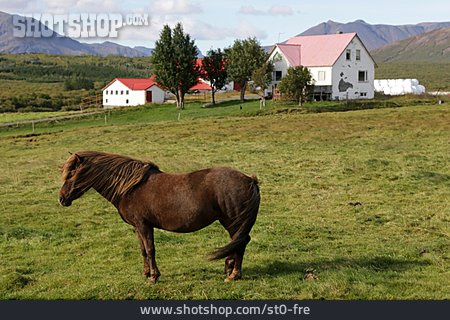 Iceland, Human Settlement, Icelandic Horse