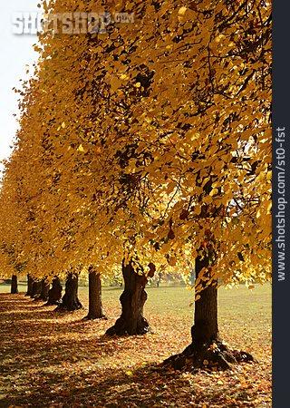 Autumn, Tree Alley