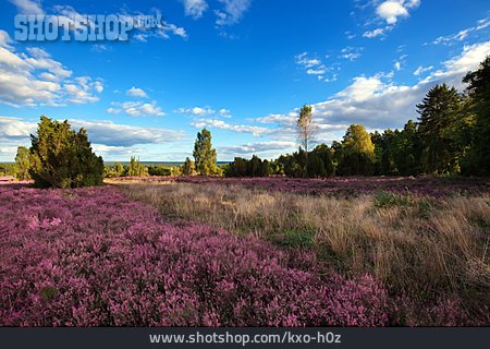 Nature, Heath, Lunenburg Heath