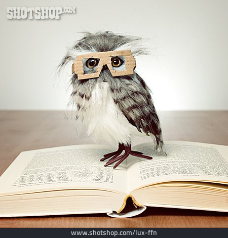 Education, Reading, Owl, Educated