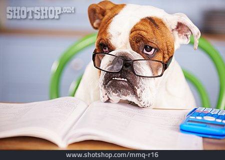 Finance, Bulldog